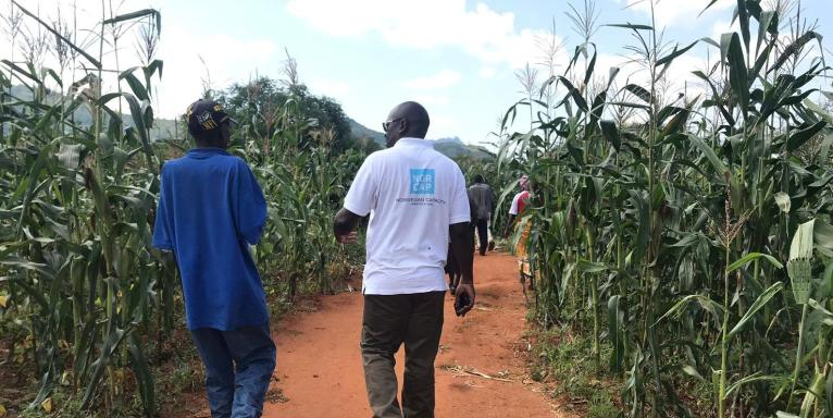 NORCAP expert Collison Lore Winga walking with a maize farmer in a maize field in Bura, Taita Taveta.